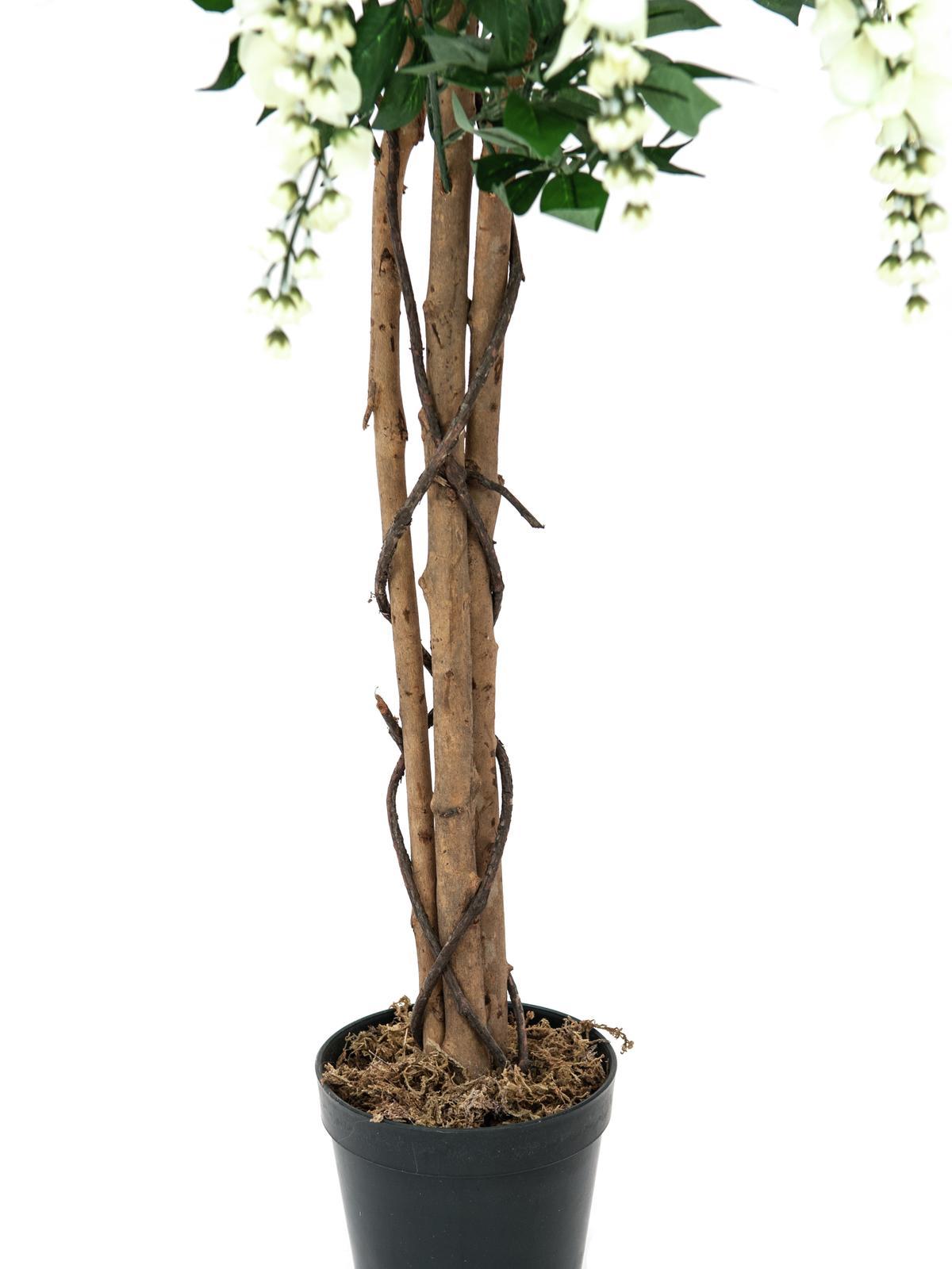Wistaria, bílá, 150 cm