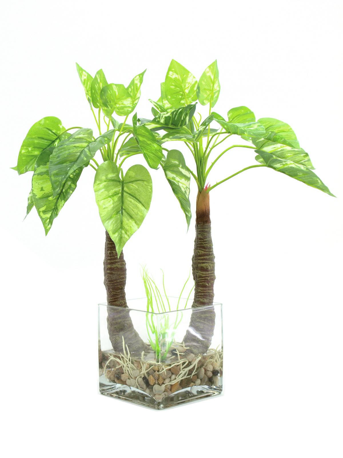 Pothos ve skle, 26 listů, 50 cm