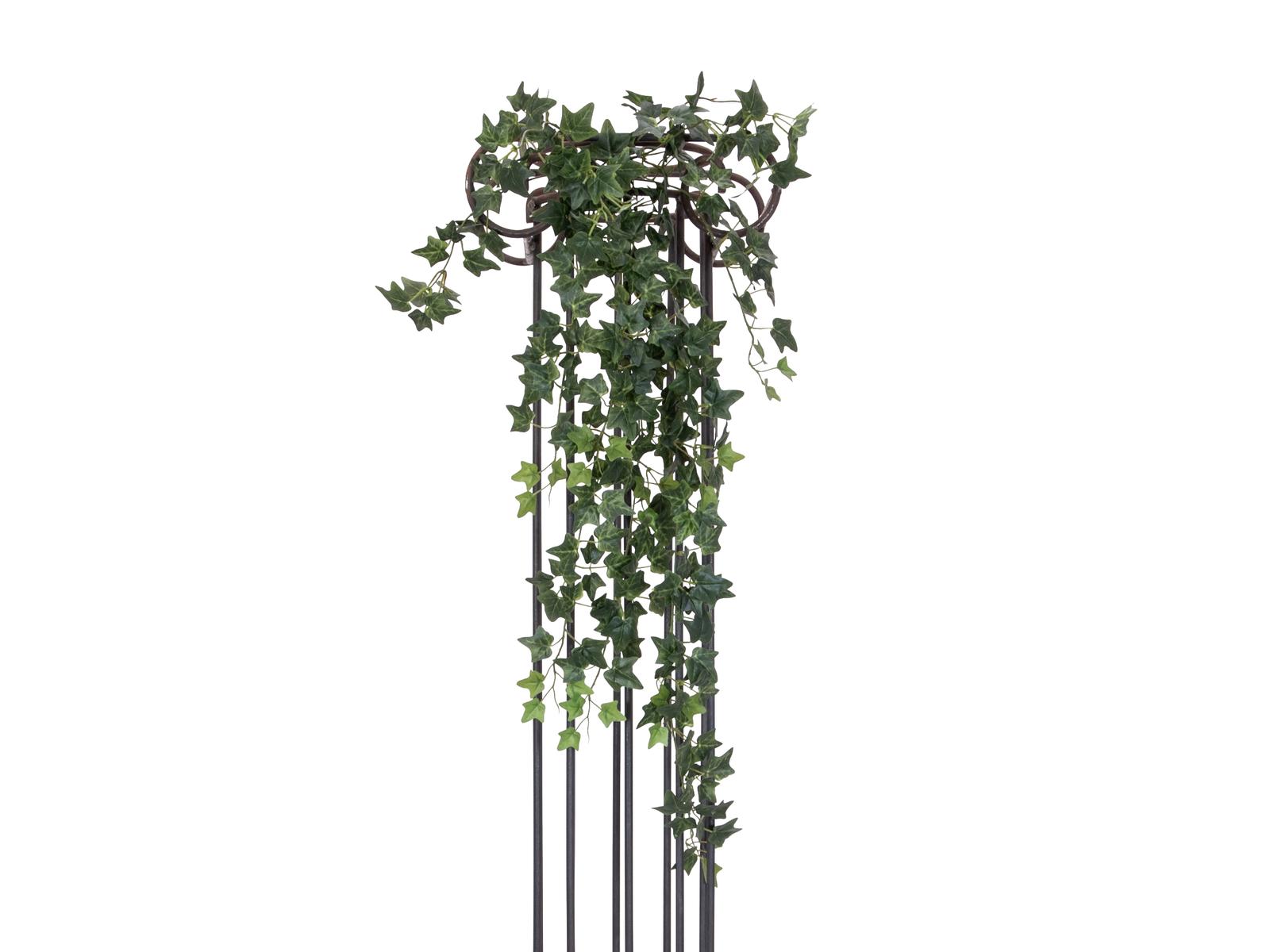 Divoký břečťan trs velký, 100 cm