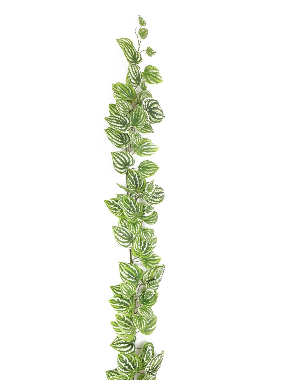 Réva se zeleno-bílými  lístky, 180 cm