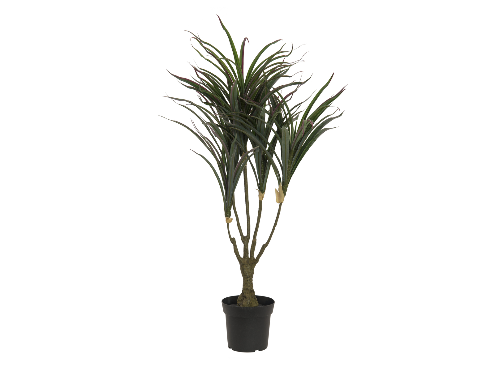 Dracena zeleno-červená, 90 cm