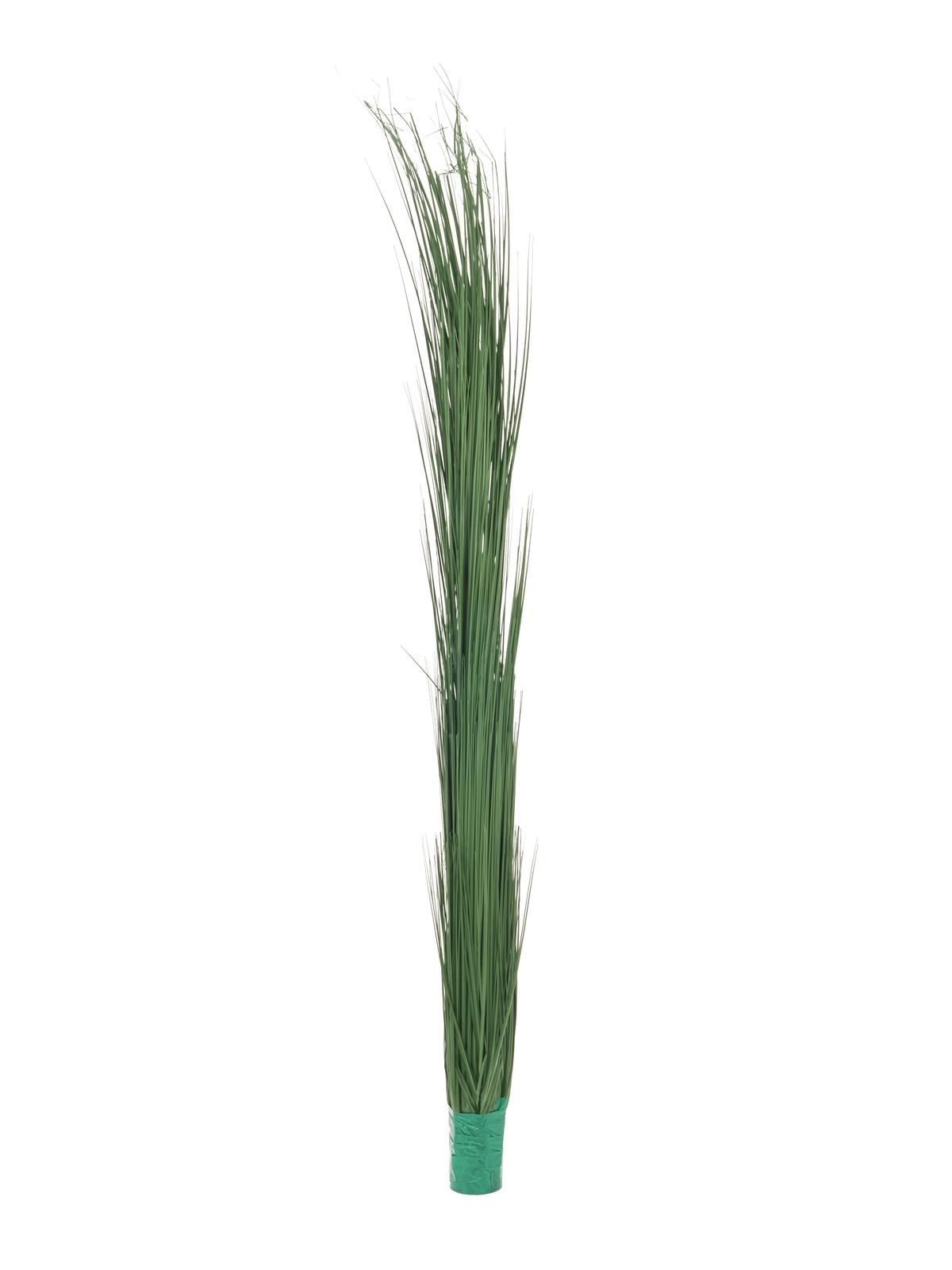 Zblochan vodní, tmavě zelený, 127 cm