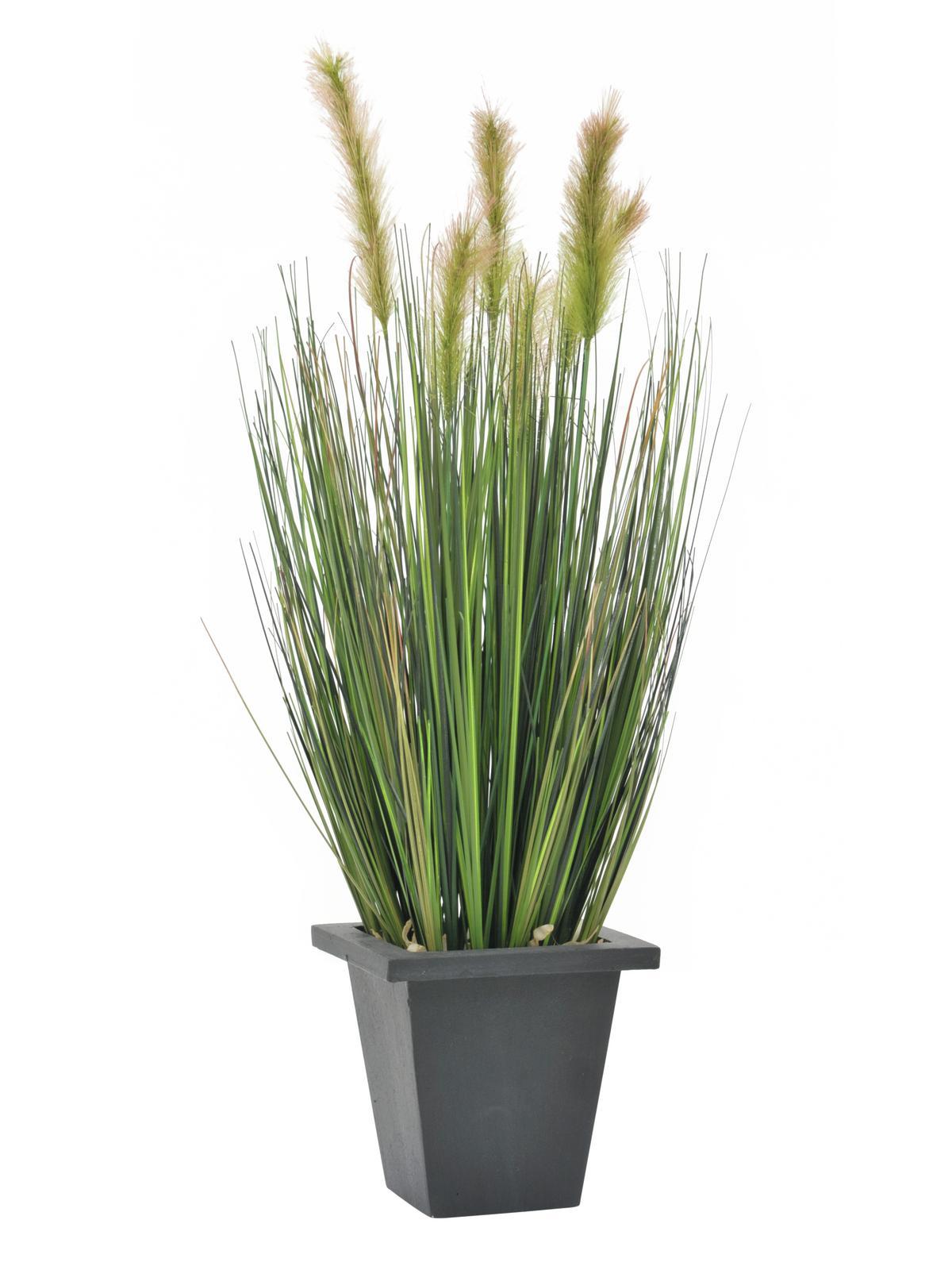 Vodní tráva v květináči, 60 cm