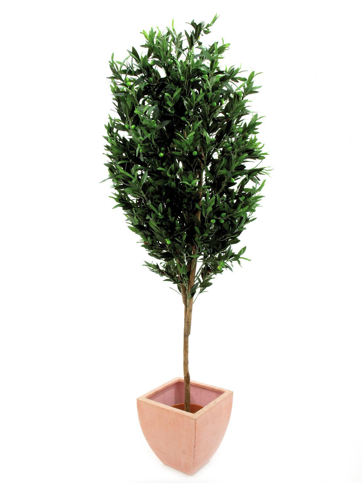Olivovník s plody, 200 cm