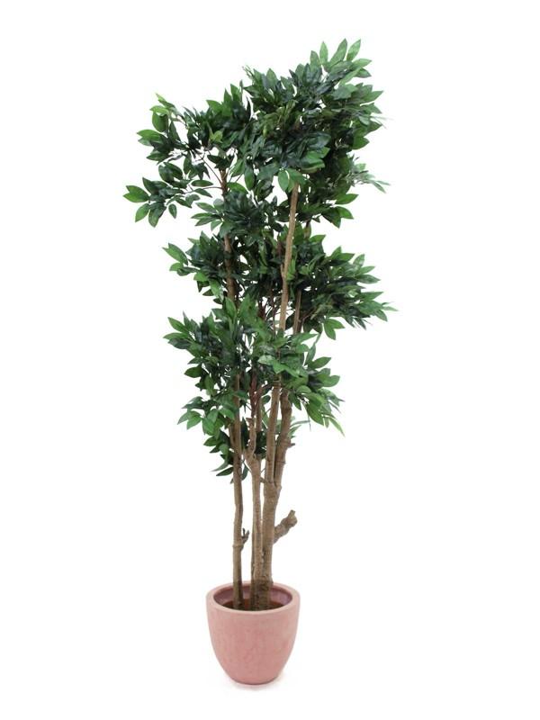 Lesní strom ze středozemí, 180 cm