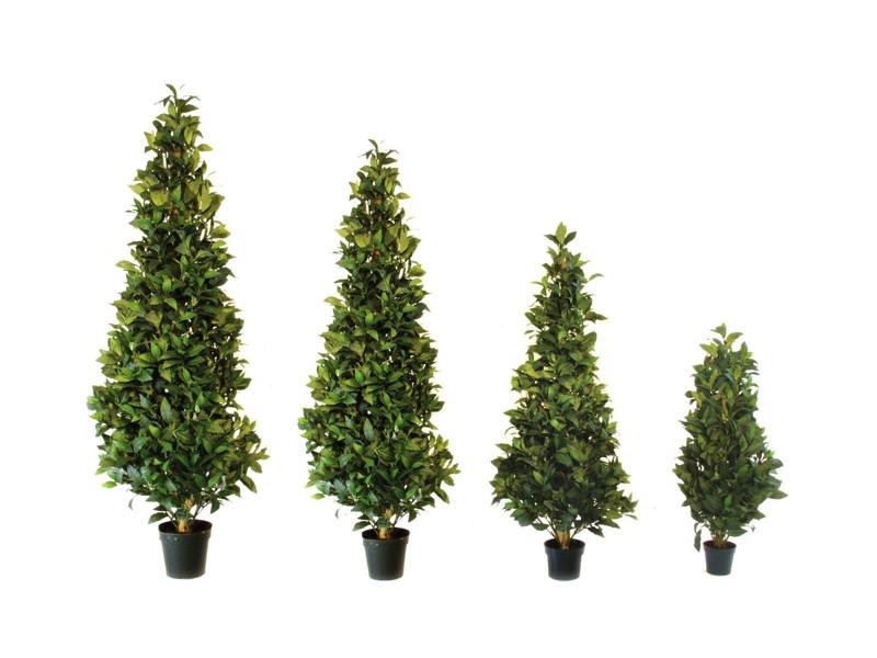Vavřín kuželovitý strom 120 cm