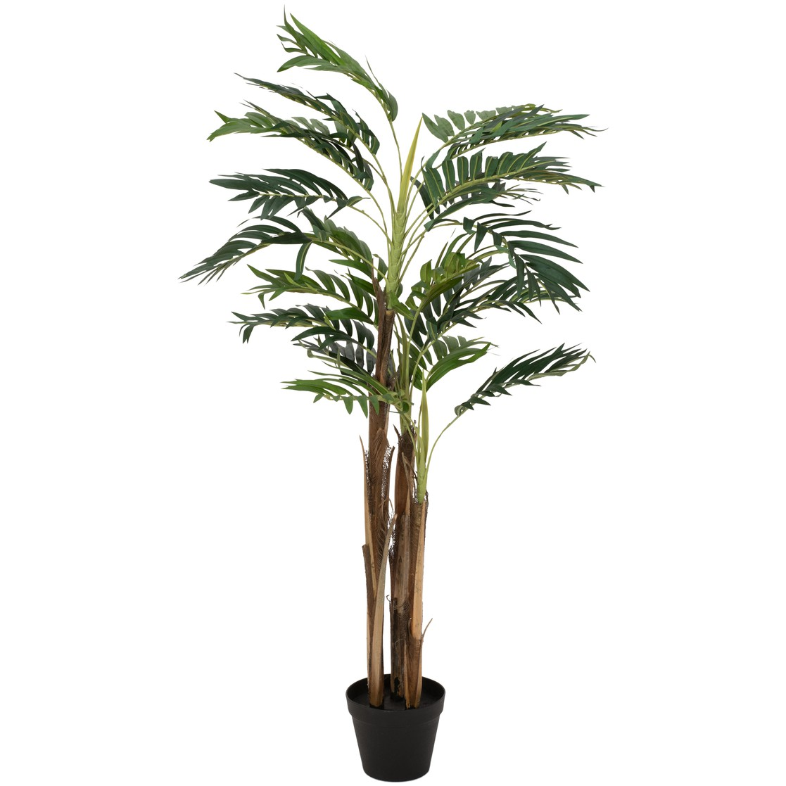 Areca palma, 110 cm
