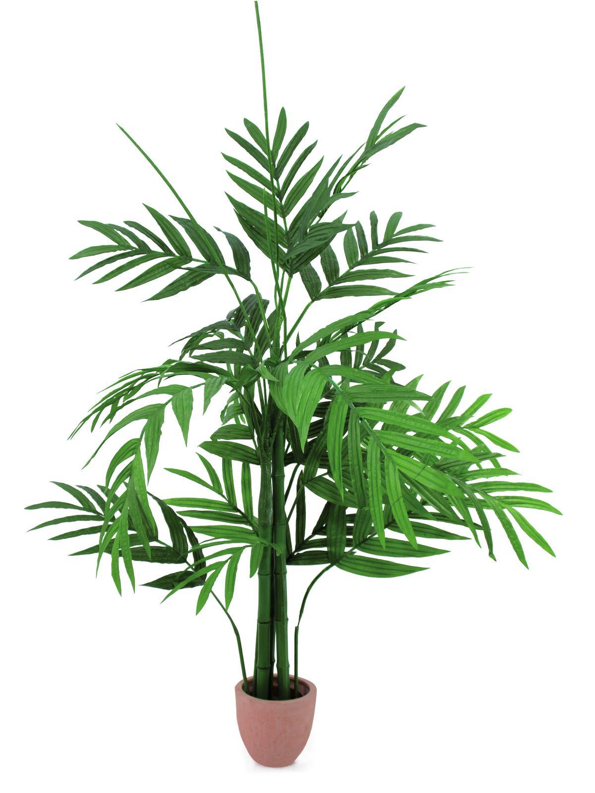 Areca palma s velkými listy, 230 cm
