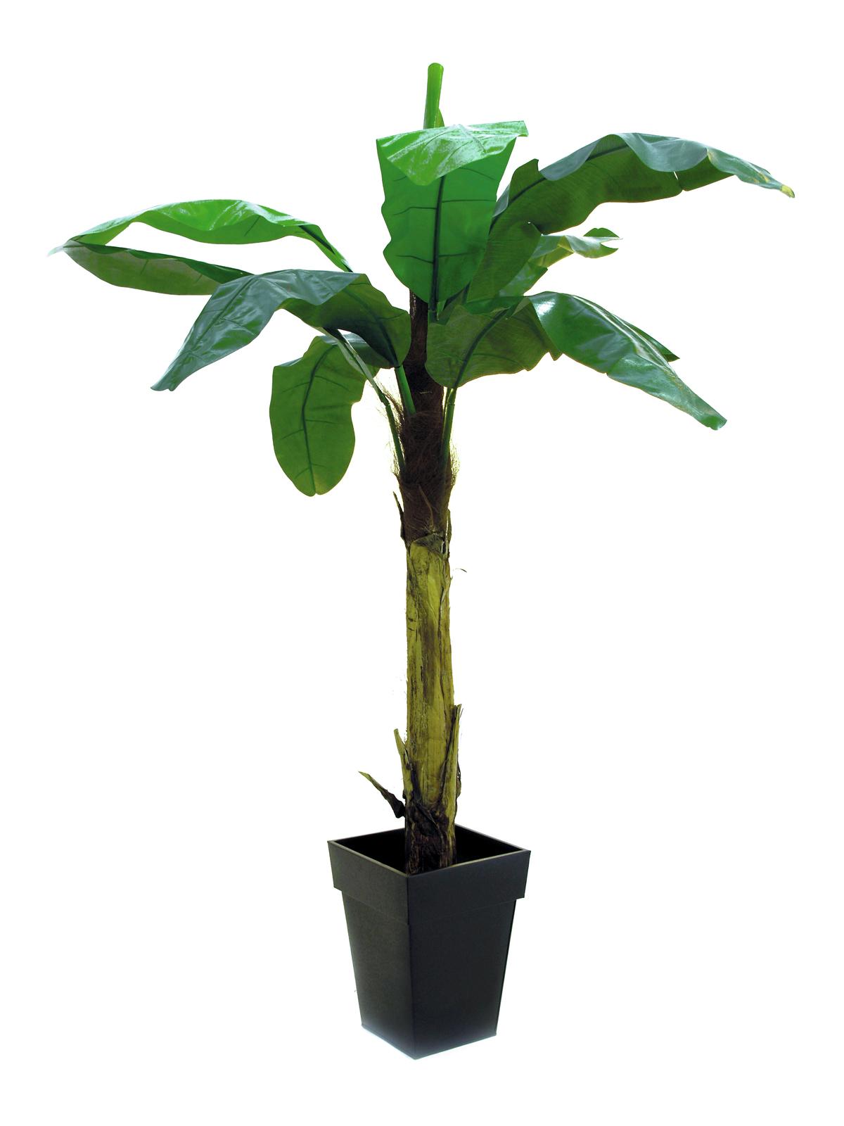 Banánovník 10 listů, 220 cm