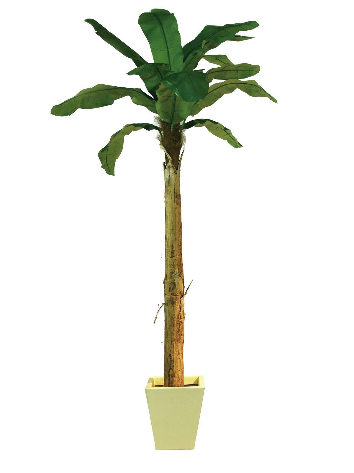 Banánovník 13 listů, 270 cm