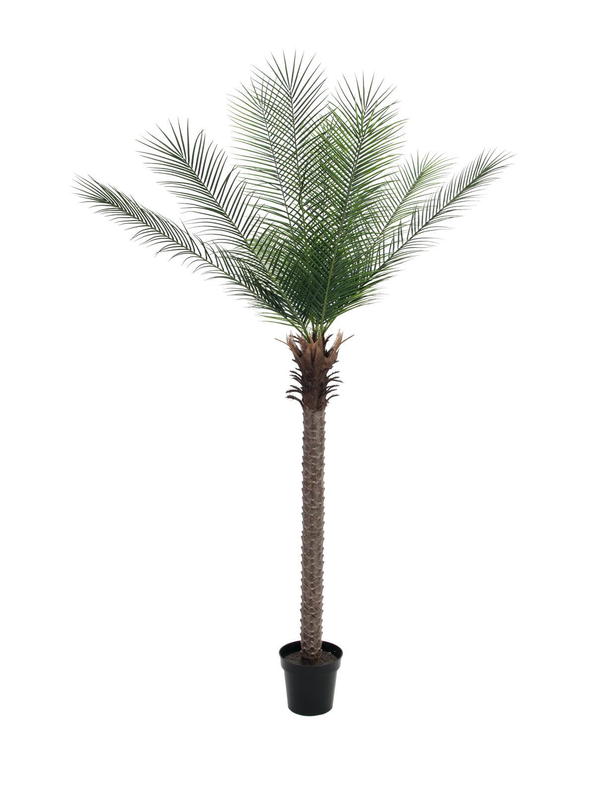 Phoenix palma deluxe, 220 cm