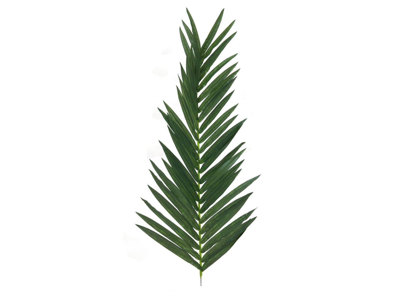 List kokosové palmy, 150 cm