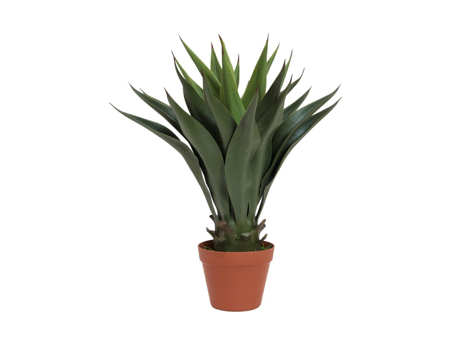 Yucca keřík tmavě zelený, 50 cm