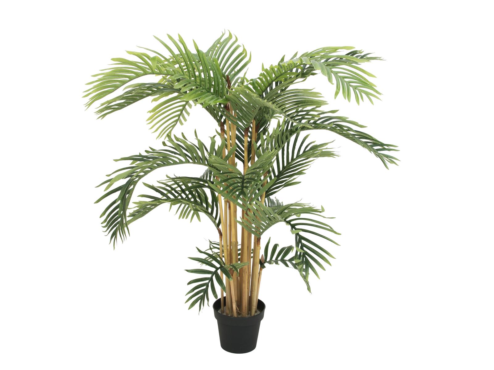 Kentia palma, 140 cm