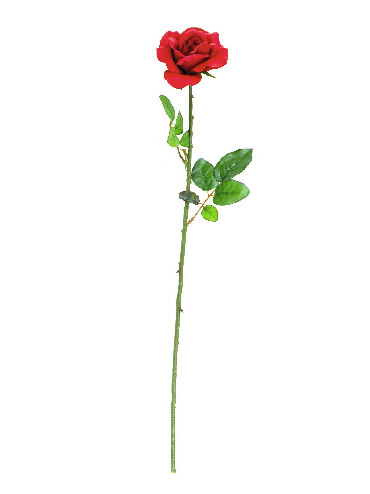 Růže s otevřeným květem, červená