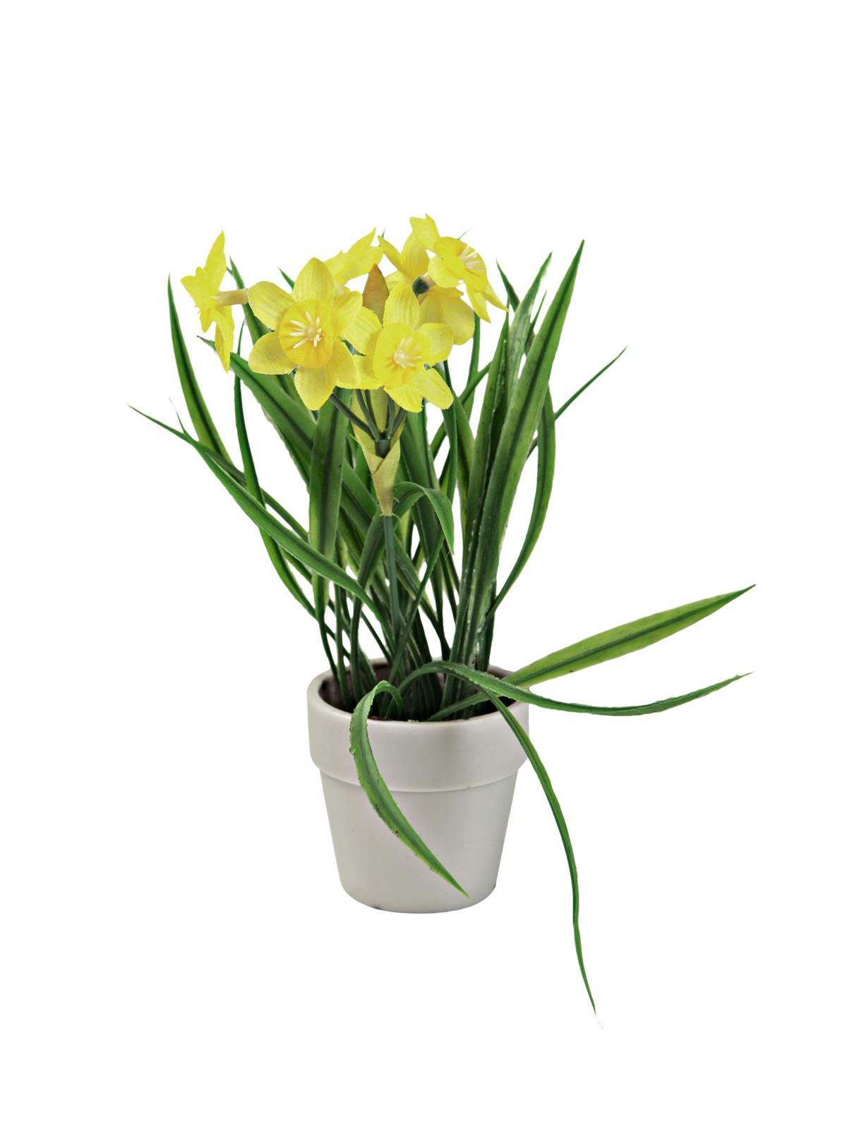 Narcis se žlutými květy, 22 cm