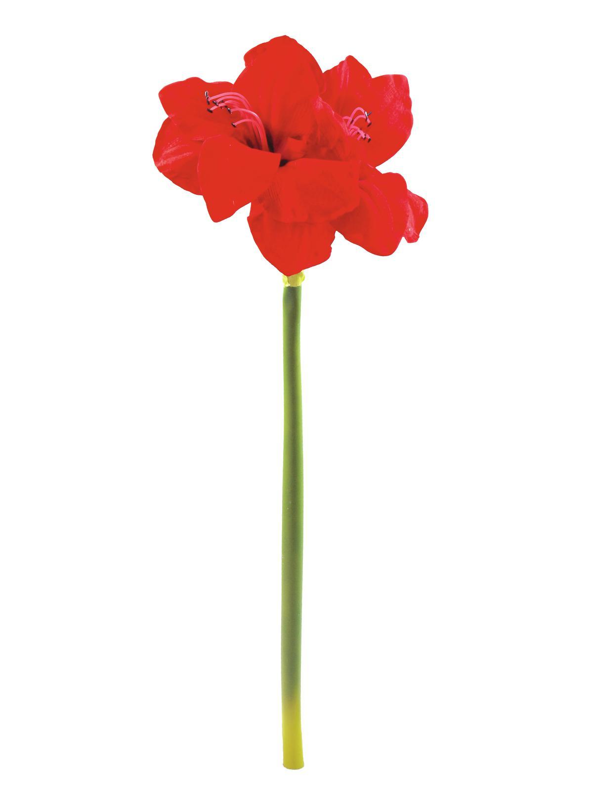 Amaryllis červený, 72 cm