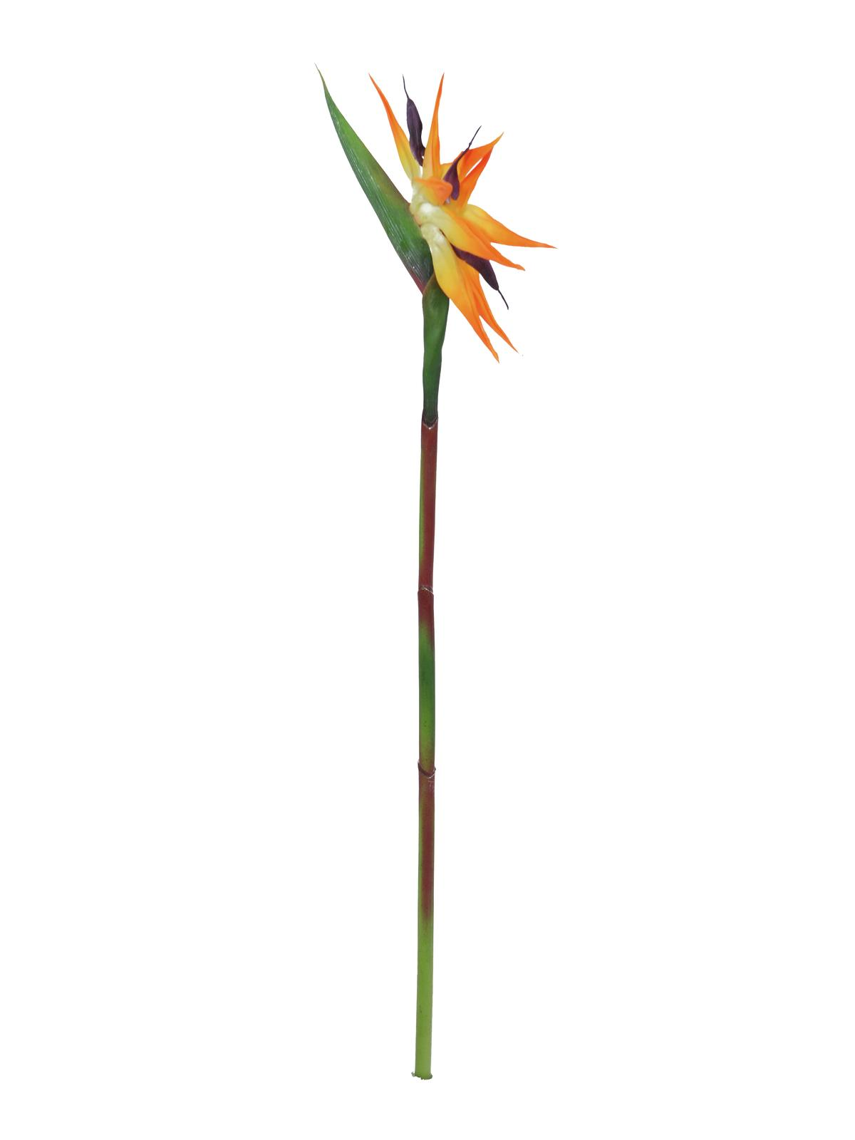 Strelície oranžová, 95 cm