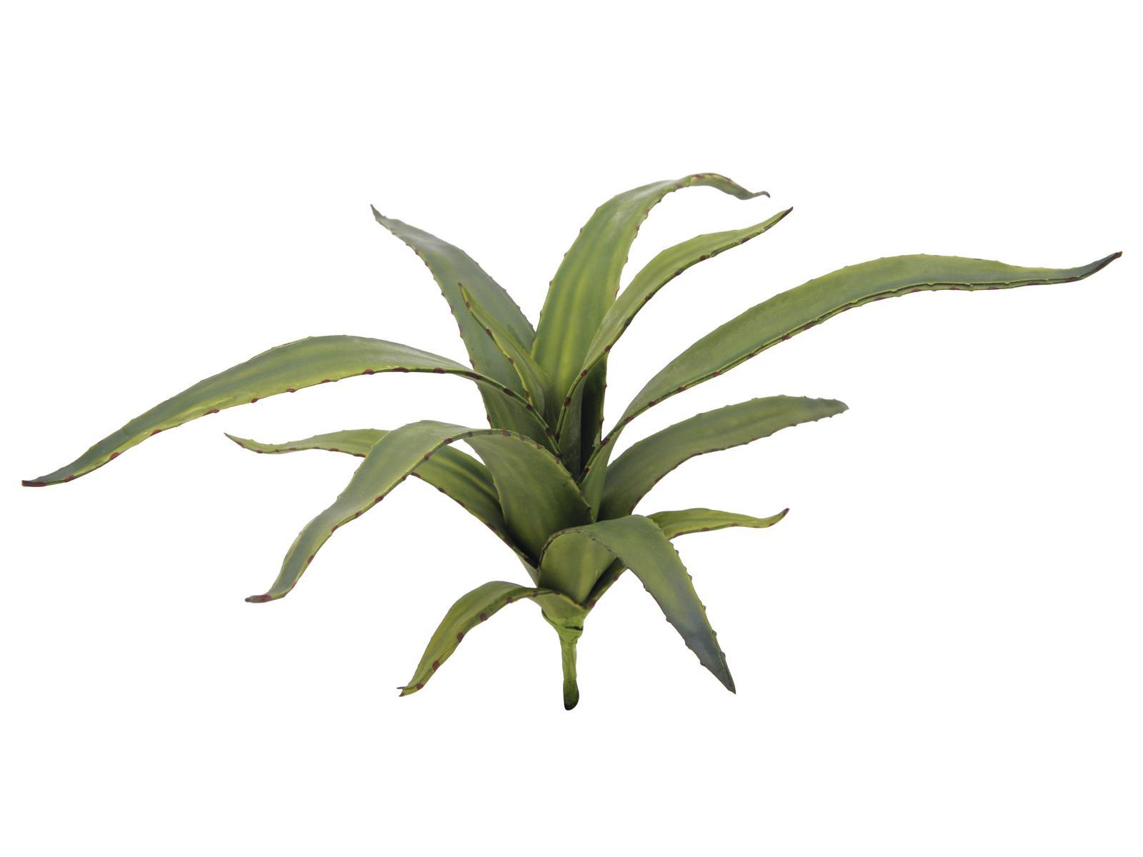 Aloe vera zelená, 66 cm