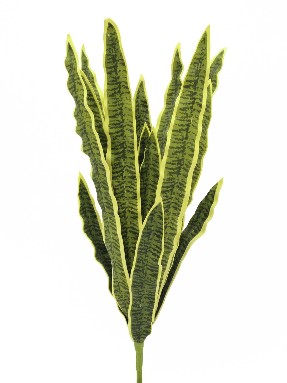 Sansevieria zeleno-žlutá, 50 cm