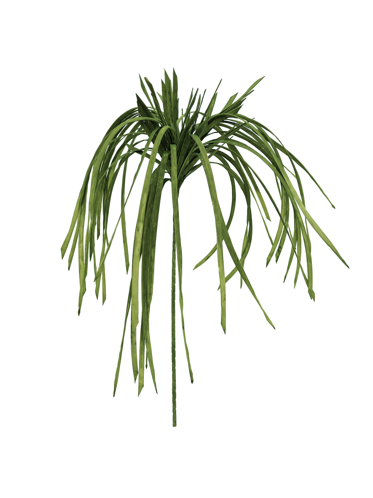 Mořská tráva (EVA), zelená