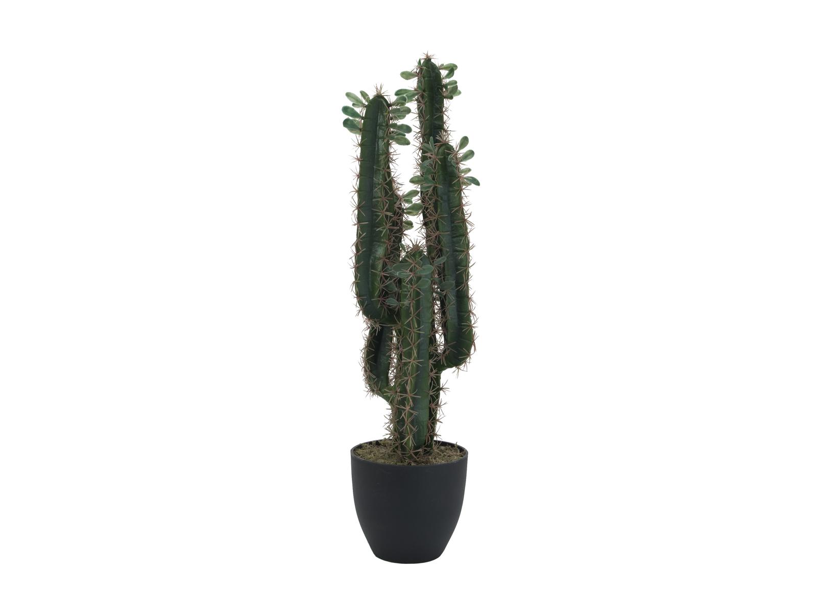 Mexický kaktus s listy, 75 cm