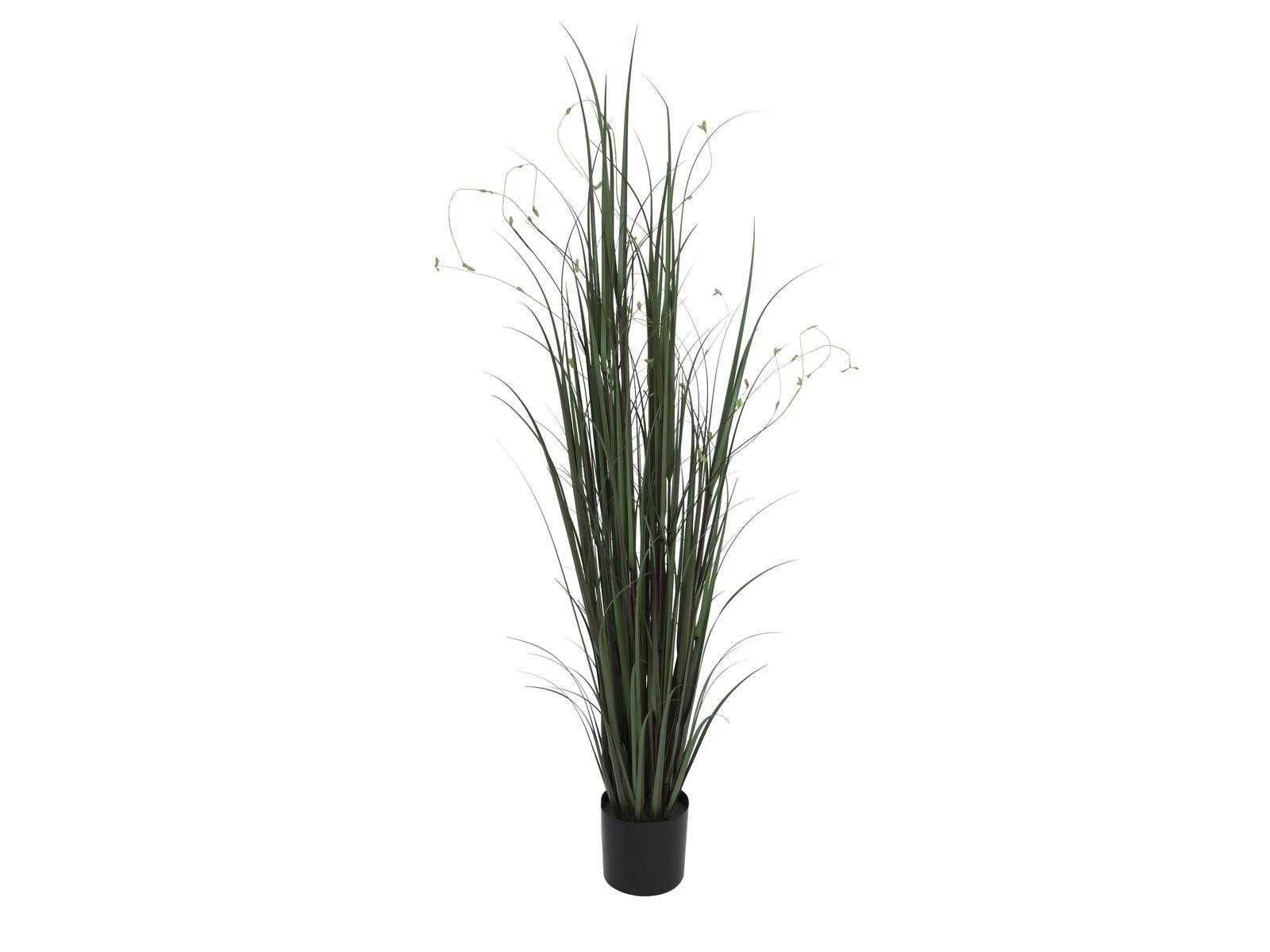 Willow branch grass, 183 cm