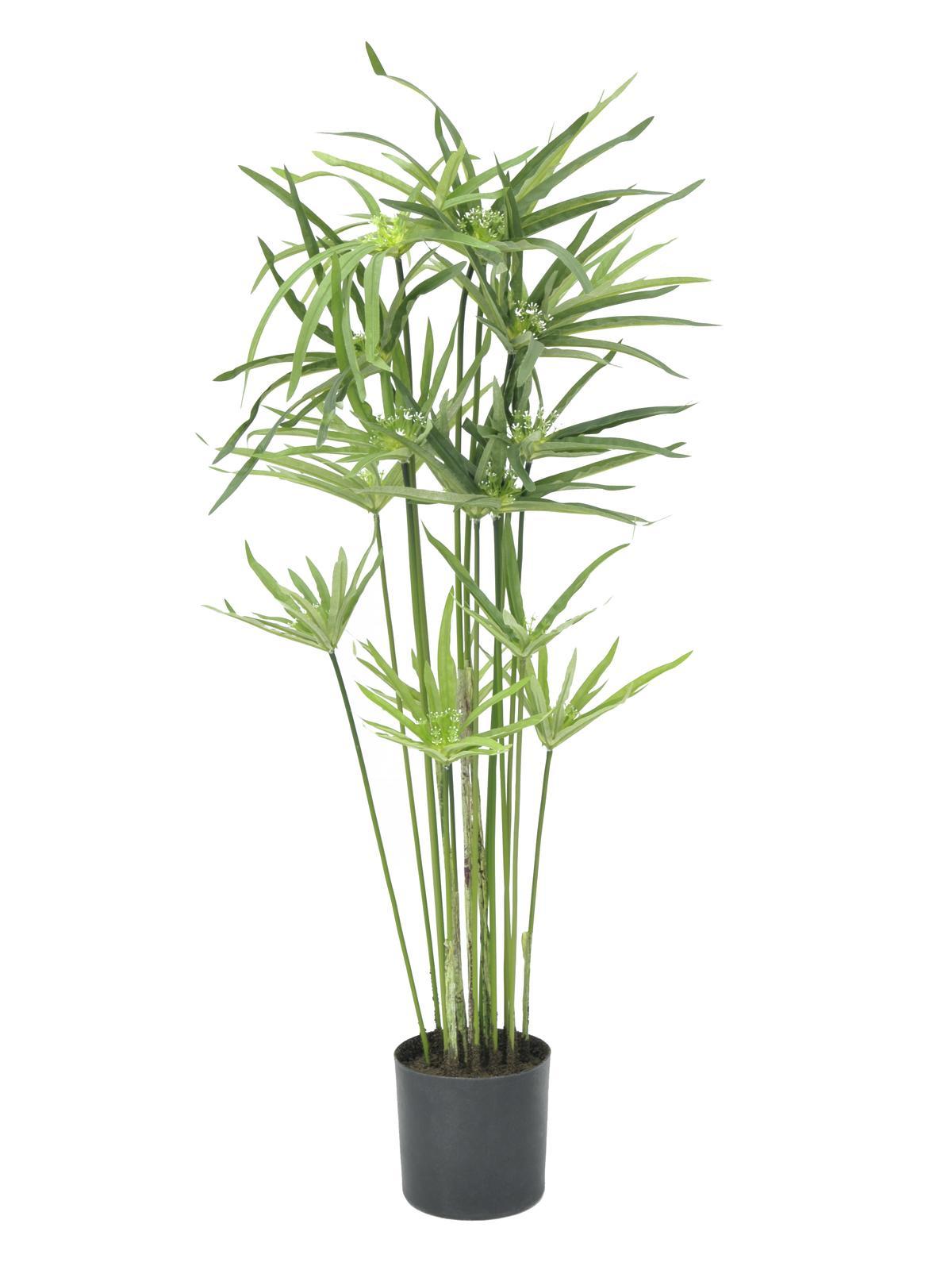 Polní tráva, 76 cm