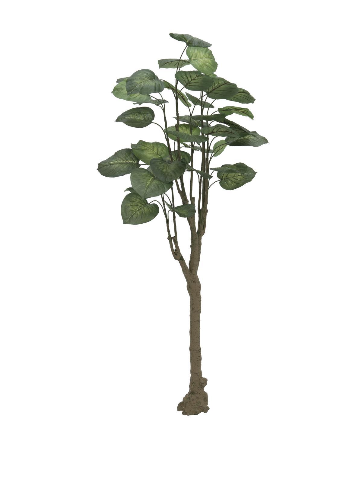 Pothos stromek, 150cm