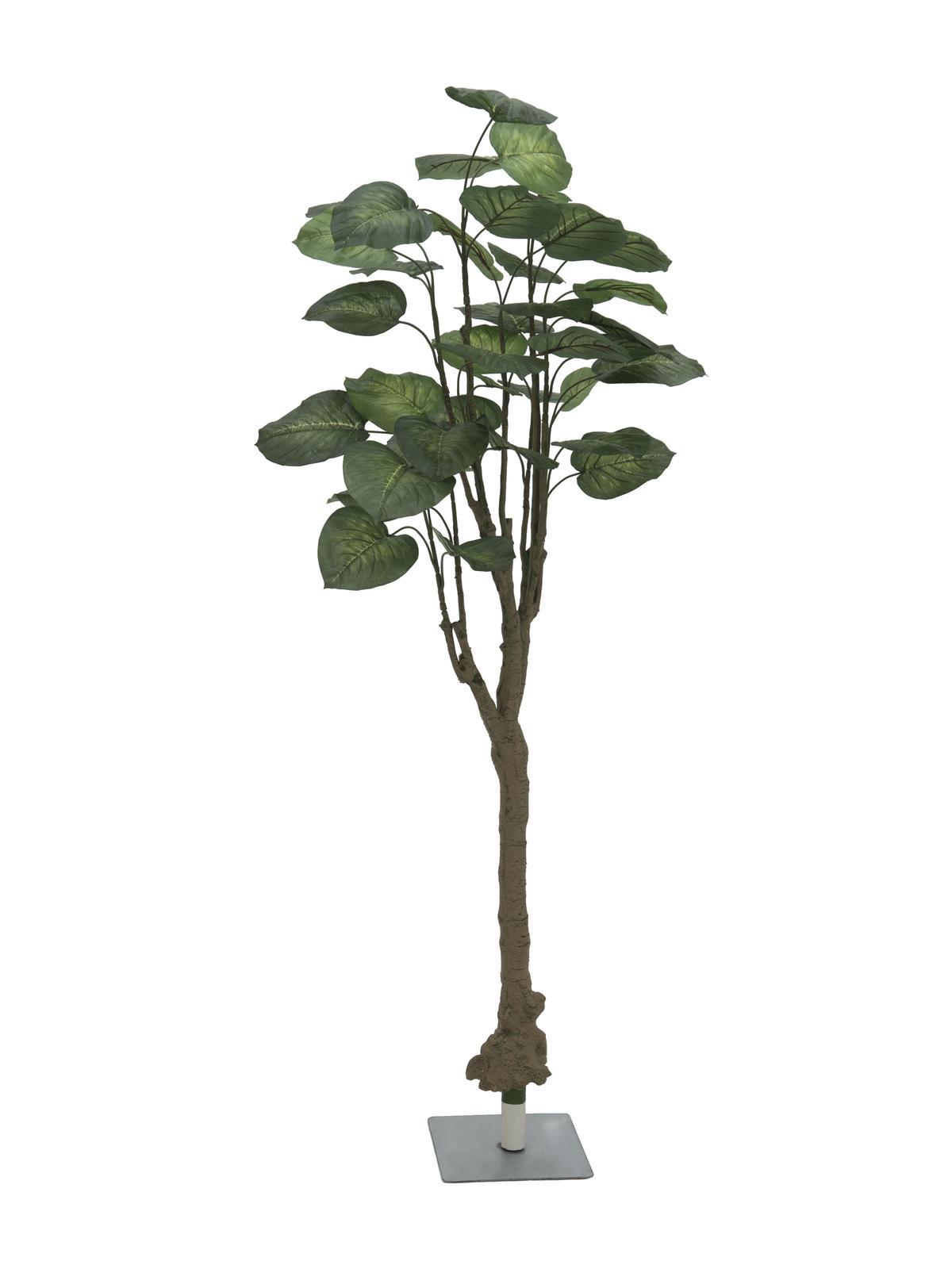 Pothos stromek, 175cm