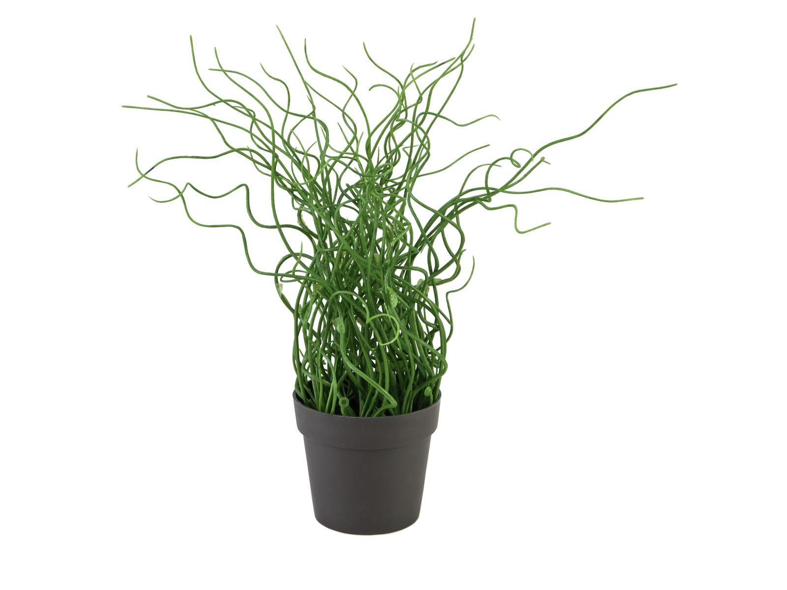 Kroucená tráva v hnědém květináči, PE, 38cm