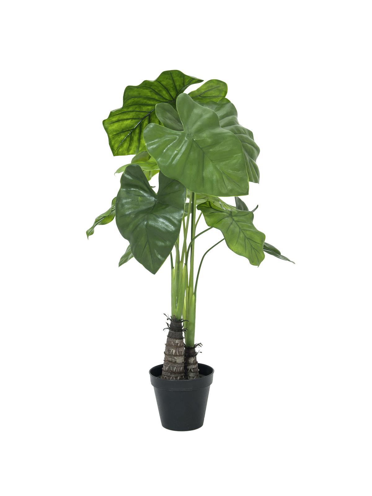 Caladium palma, 90 cm