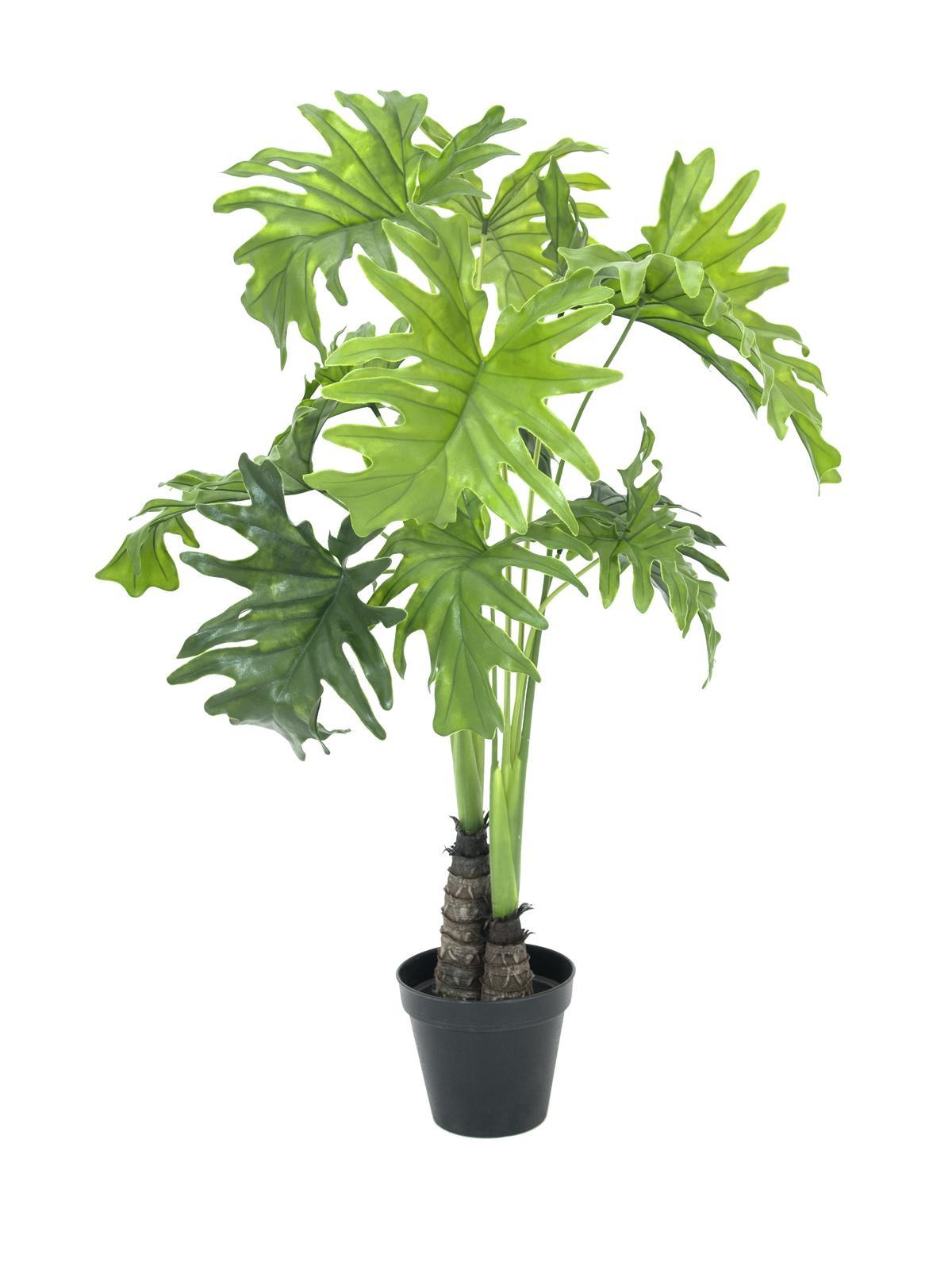 Filodendron palma, 90 cm