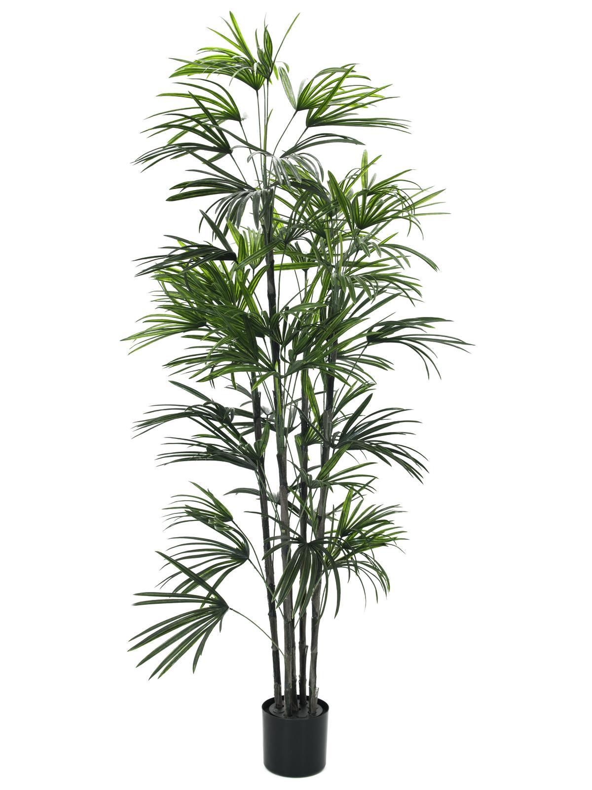 Fan palma, 150 cm