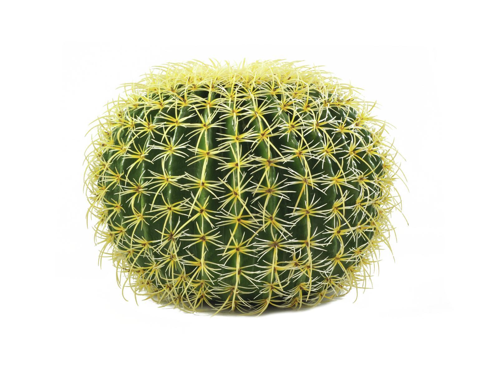 Kulatý zlatý kaktus, 48cm