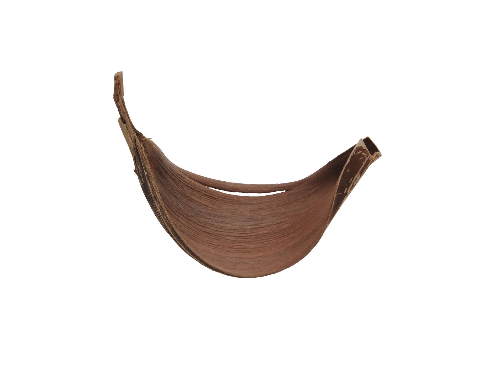 List Galary, vysušený, přírodní, 95 cm