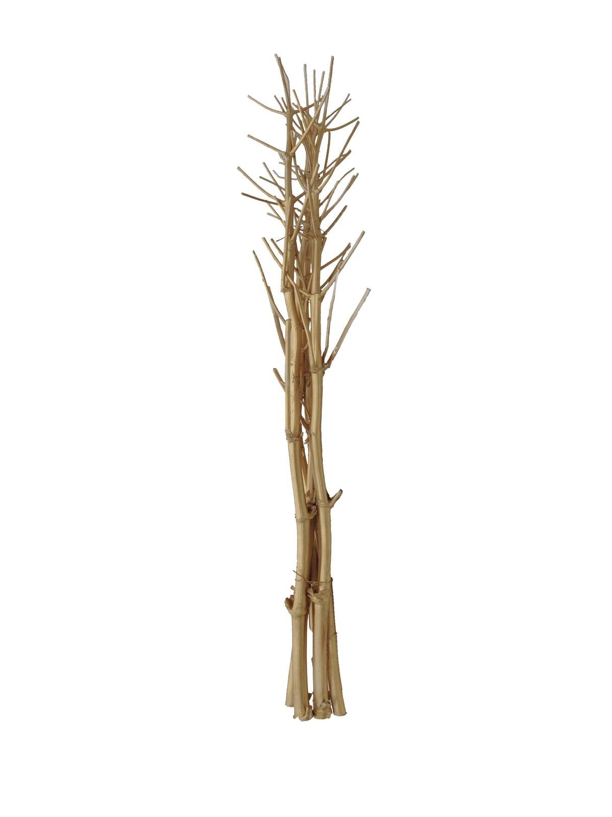 Suché větvičky fenyklu, zlatá, 160 cm